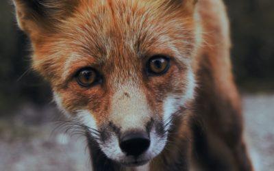 Das geht unter die Haut: Die Grausamkeit der Pelzindustrie