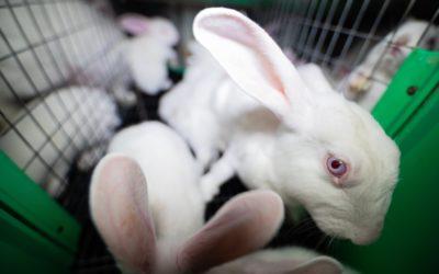 Kaninchen: Wie der Osterhase für uns leiden muss